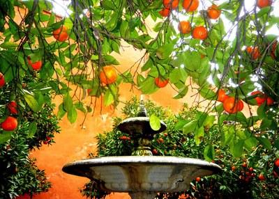 fuente con naranjos
